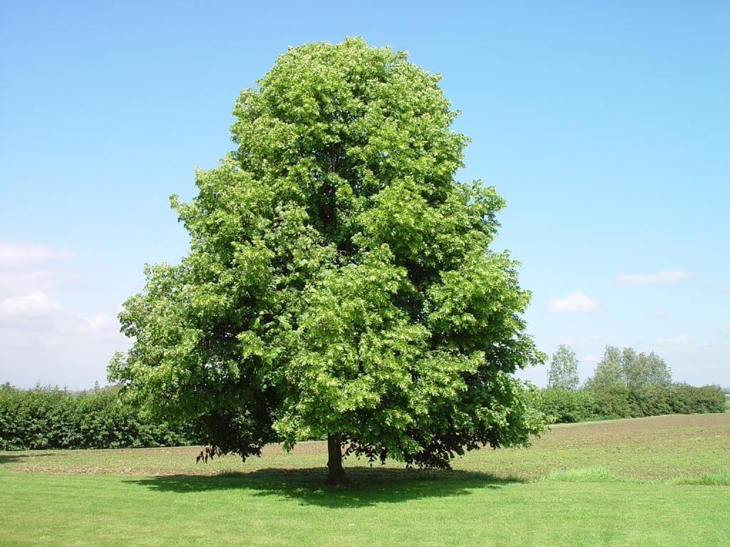 a41f061464bf841034ab7415edf1fc23 - Дерево для сауны и термообработанная древесина