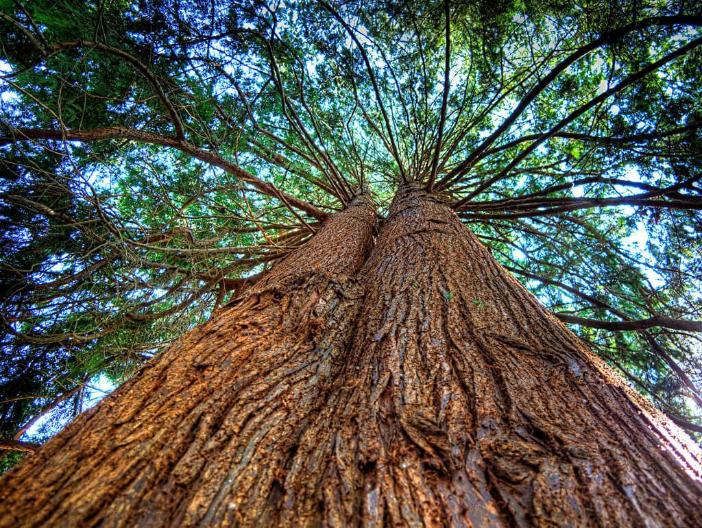 f457bfca14e7fea3fe0f1aecdb48696c - Дерево для сауны и термообработанная древесина