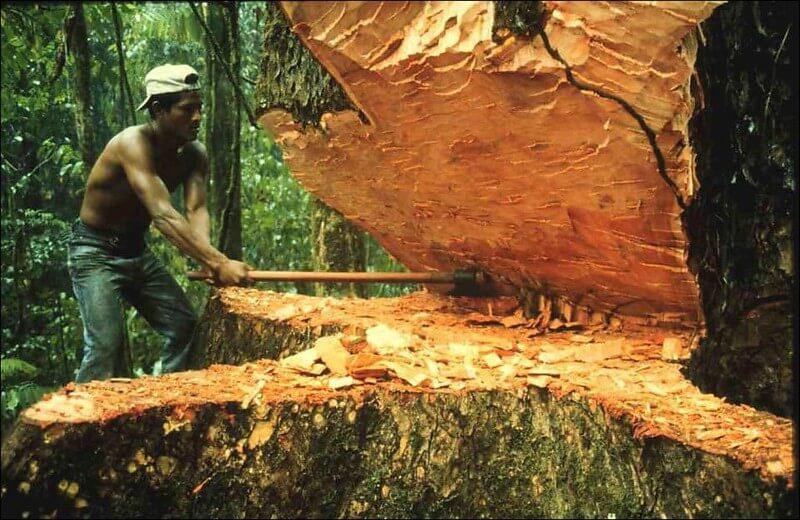 iz rubriki a vam slabo - Дерево для сауны и термообработанная древесина